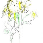 Sonnenblume_04